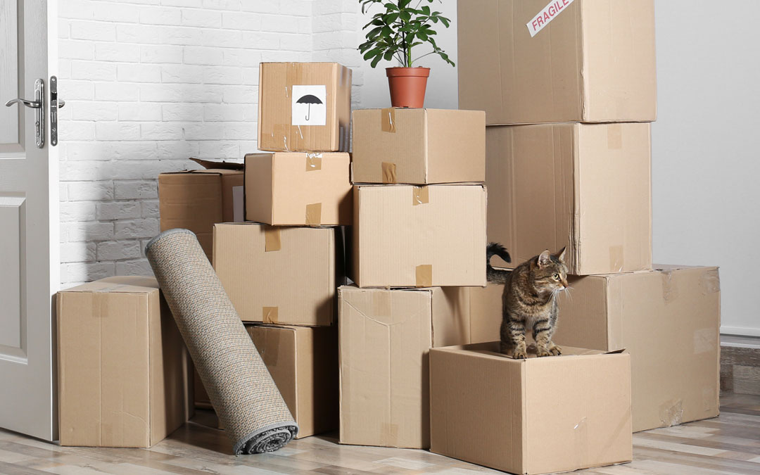 The 4 Ps of Moving House & Home Right