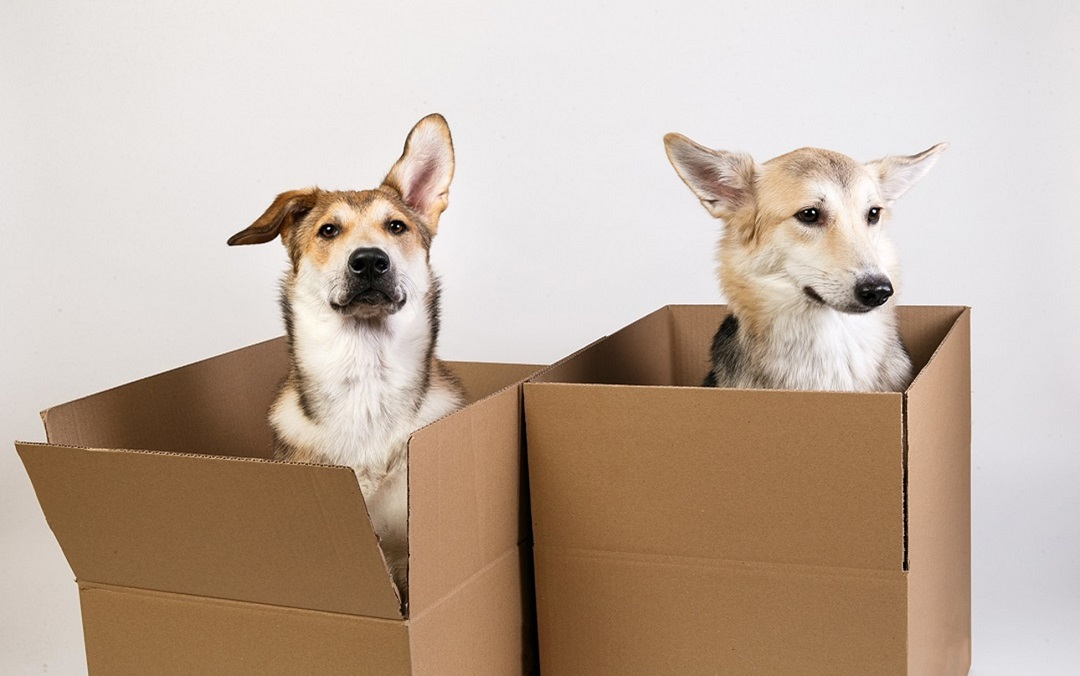 Cardboard Boxes and Your Animals